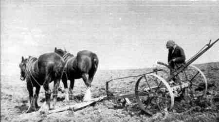 Agricultural Scene from early 20th century, showing horses and equipment