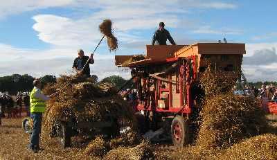 Stooks go through the threshing machine