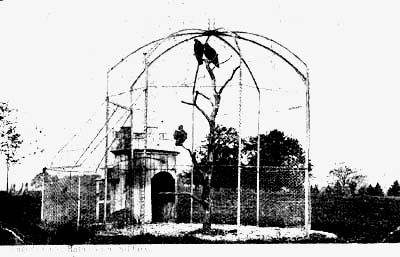 Eagle's Cage
