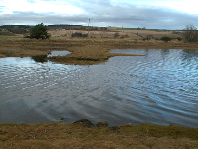 The possible site of the sluice of one of the two salt mills in Munlochy Bay.