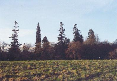 Brahan Estate - 'Memories' (the trees)