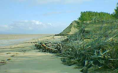 Trees lost due to erosion