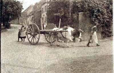 1890s - An unusual picture of a bullock cart.