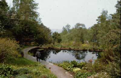 Inverewe Lily Pond