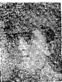 Macdonald Alexander, Pte, Evanton