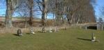St. Martin's Burial Ground
